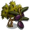 Olive Tree Regalo Monedas que produce: 112 Se vende por: 60