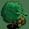 Walnut Tree Regalo Monedas que produce: 50 Se vende por: 29