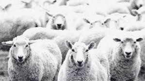 conformisme identique