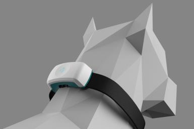 Companion Collar