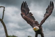 3 Artificial Intelligence Companies To Keep an Eagle Eye On