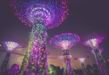 Singapore Offering Free AI Courses for 10,000 Citizens