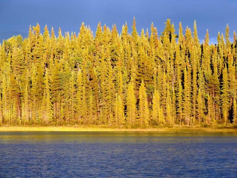 אגם בויה, בריטיש קולומביה