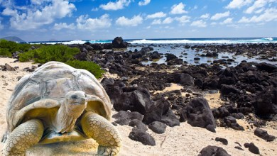 جزر غالاباغوس