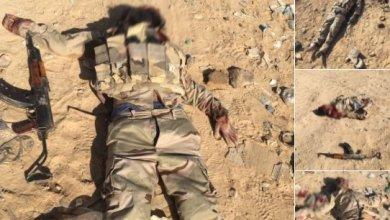 قتلى داعش في سيناء