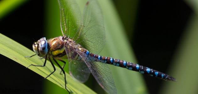 مشهد يحتاج للتأمل .. فيديو: حشرة اليعسوب تنظف نفسها من المطر