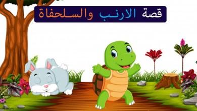 الأرنب والسلحفاة قصص اطفال -صحيفة هتون الدولية