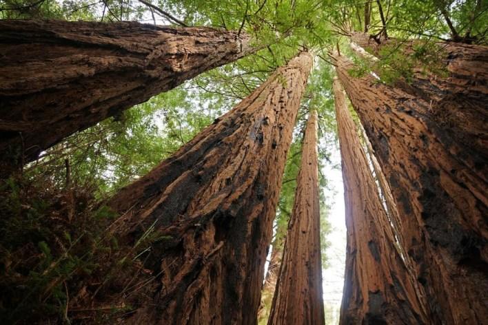 أجمل غابات على مستوى العالم  -صحيفة هتون الدولية-