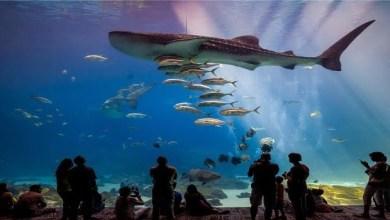 أروع وأكبر أحواض للأسماك في العالم -صحيفة هتون الدولية-