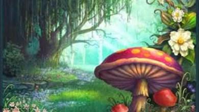 الأطفال في الغابة الصغيرة -صحيفة هتون الدولية