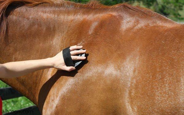 شاهد: طريقة تنظيف الحصان - صحيفة هتون الدولية