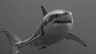 شاهد: أسماك القرش داخل محمية في دبي - صحيفة هتون الدولية
