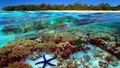الحاجز المرجاني العظيم.. من عجائب الطبيعية السبع في أستراليا - صحيفة هتون الدولية