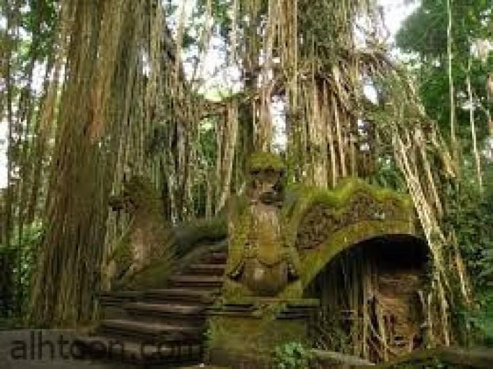 غابة أوبود للقردة من أهم المعالم الطبيعية في بالي  -صحيفة هتون الدولية