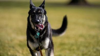 شاهد: ردة فعل كلب لفتاة ضايقته - صحيفة هتون الدولية