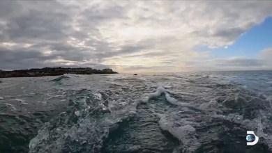 هل شاهدت سمكة قرش تقفز من قبل؟ - صحيفة هتون الدولية
