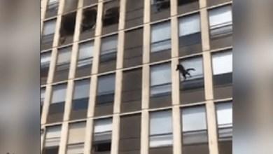 شاهد: قط يقفز من بناية شب فيها حريق - صحيفة هتون الدولية