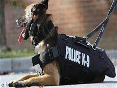شاهد: الكلب الطبيب في إسبانيا ح صحيفة هتون الدولية