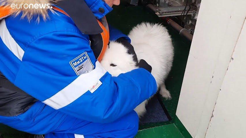شاهد: كلب تائه في سيبريا - صحيفة هتون الدولية