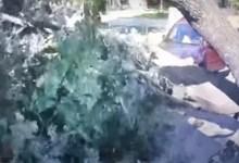 شاهد: شجرة معمرة تسقط على طفل - صحيفة هتون الدولية