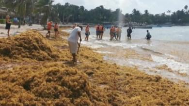 شاهد: الطحالب تسيطر على شواطئ المكسيك - صحيفة هتون الدولية