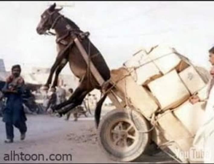 اجمل الصور الطريفة المضحكة -صحيفة هتون الدولية