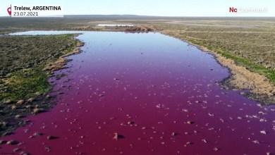 شاهد: تحول بحيرة للون الوردي - صحيفة هتون الدولية