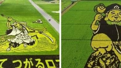 لوحة فنية في حقول الأرز باليابان - صحيفة هتون الدولية