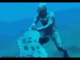 شاهد: سمكة كبيرة تصدم غواص - صحيفة هتون الدولية