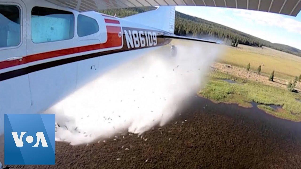 شاهد: طائرة تسقط أسماك في بحيرة - صحيفة هتون الدولية -
