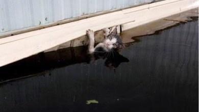 شاهد: إنقاذ قطة عالقة في قبو منزل - صحيفة هتون الدولية