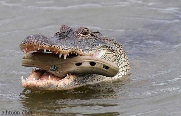 صور لحيوانات فى مواقف طريفه و مضحكة -صحيفة هتون الدولية