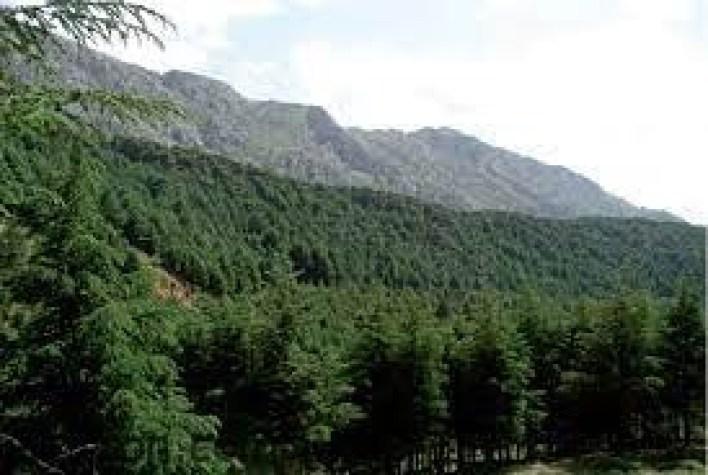أين توجد غابات اطلس ؟ -صحيفة هتون الدولية -