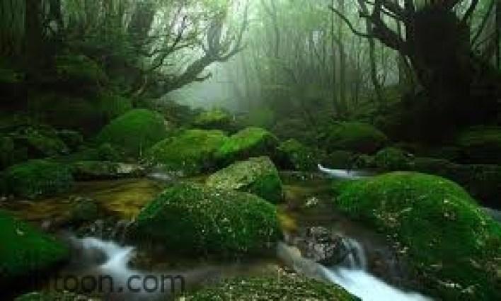 أفضل الأماكن الطبيعية في اليابان -صحيفة هتون الدولية