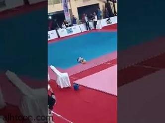 شاهد: معركة بين قطتين في صالة أولمبياد طوكيو - صحيفة هتون الدولية