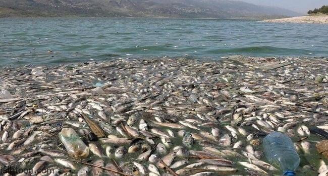 فيديو .. نفوق أسماك في نهر روماني - صحيفة هتون الدولية