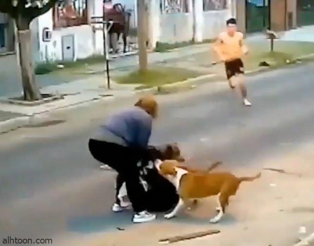 شاهد: كلاب تهاجم سيدة - صحيفة هتون الدولية