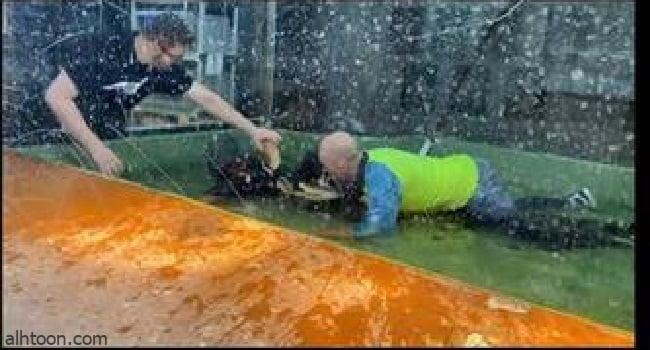 شاهد: تمساح يطبق بفكيه على يد امرأة - صحيفة هتون الدولية