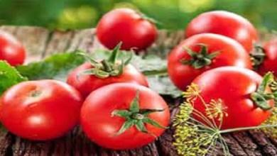 فوائد الطماطم عديدة وهامة -صحيفة هتون الدولية