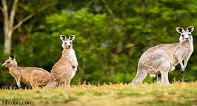 شاهد اغرب حيوانات على وجه الأرض -صحيفة هتون الدولية
