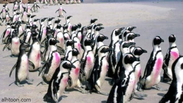 شاهد: أسراب النحل وهي تقتل البطريق - صحيفة هتون الدولية