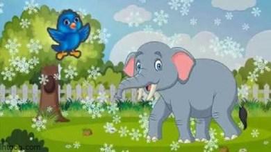 قصة ( الفيل الصغير والعصفور )