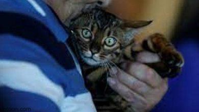 إنقاذ قطة من الموت