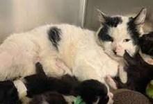 تعذيب لعائلة من القطط.. ومكافأة سخية لمن يعرف المجرم -صحيفة هتون الدولية