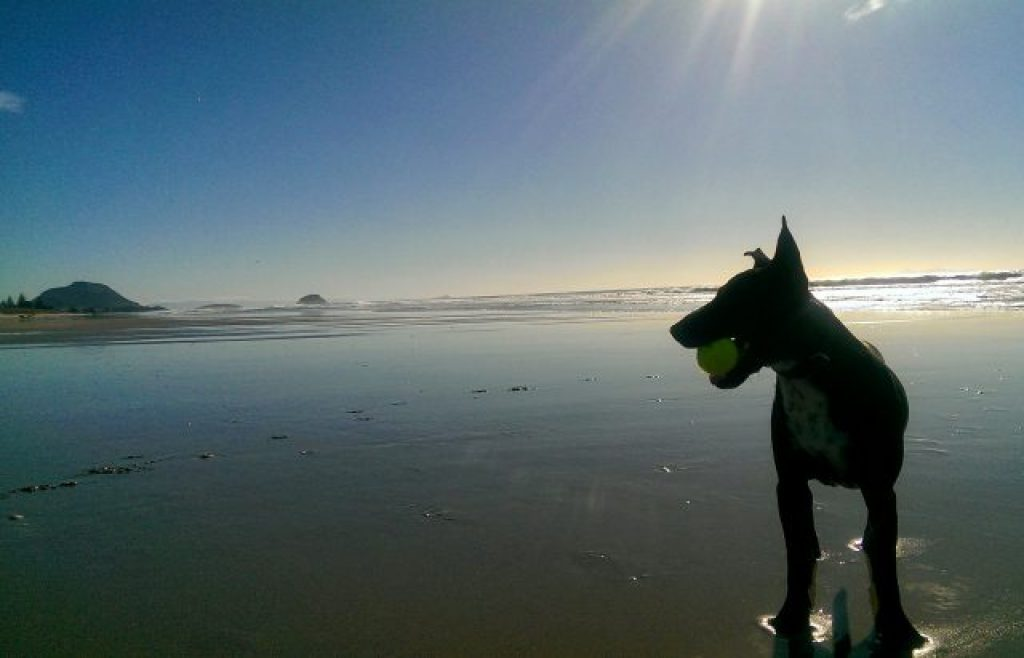 Mount Maunganui Beach Dog Walks House sitting in New Zealand, get free accommodation, best house sitting websites