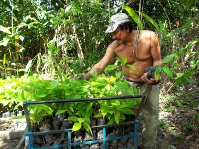 b2ap3_thumbnail_Reforestation-HDTV-1080.JPG