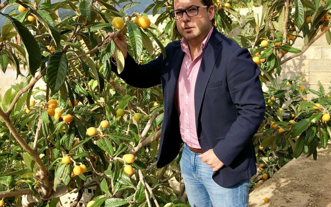 Almodóbar pide al Gobierno la reducción del IRPF para el cultivo del níspero en La Marina Baixa