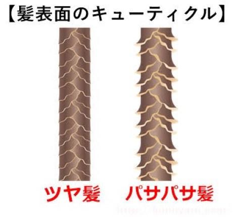 髪のキューティクル