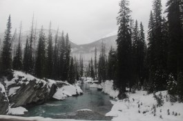 A gift from nature - Alberta
