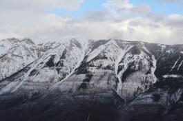 Majestic presence - Alberta